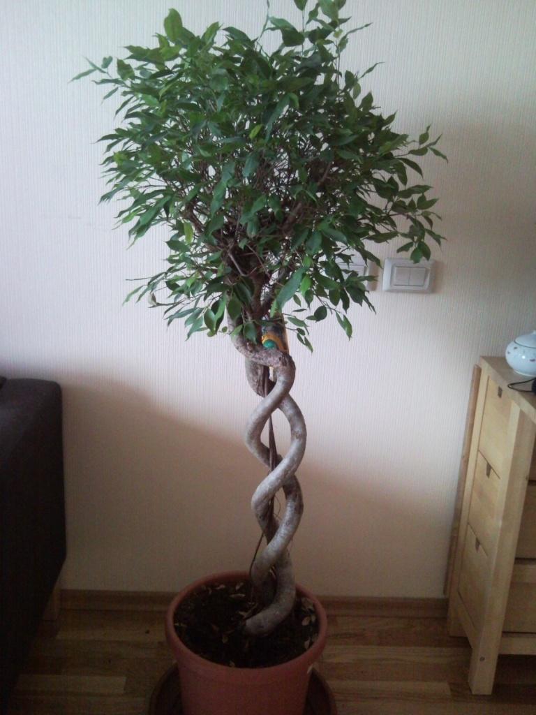 Продам комнатные деревья и кусты в