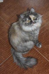 Шикарная молодая кошка