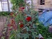 Опора для садовых растений стеклопластиковая
