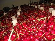 Свежие фрукты из Сербии!