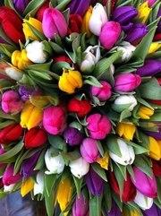Тюльпаны оптом 2016 в Новосибирске