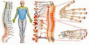Комплексная диагностика всего организма