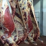 Мясо высокого качества